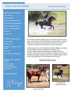 Stallion Roster_Corre Con El Viento