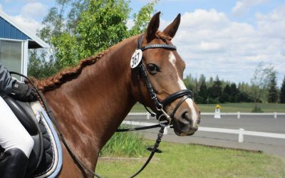 Super Talented Sport Pony