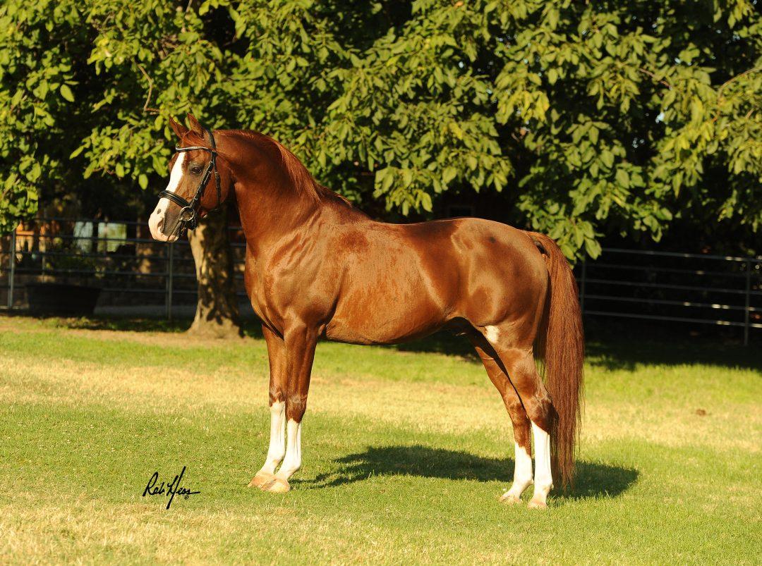 Sunhaven Sport Horses