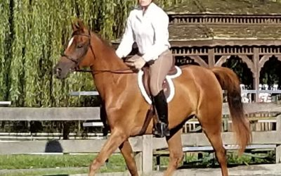 6 yr old gelding,  AM Indeed a Star, for sale