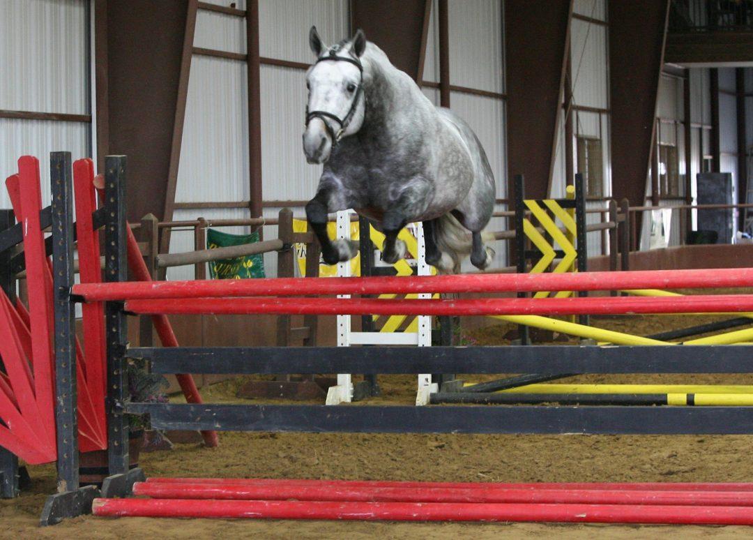 Oak Knoll Sporthorses