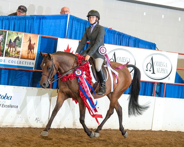 Champion Arabian Sporthorse Mare