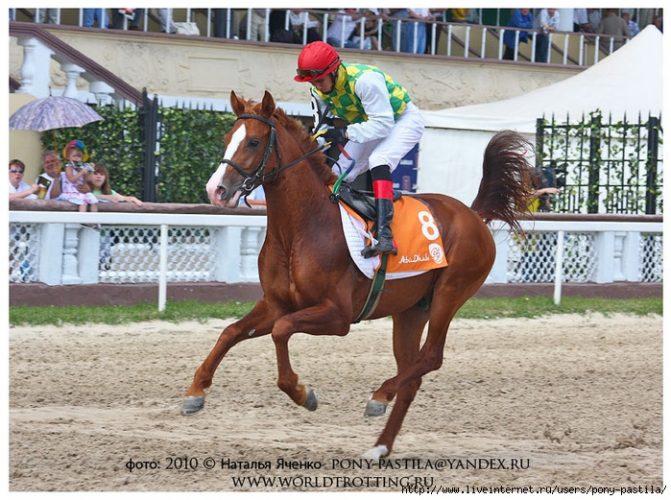 pagur-racing